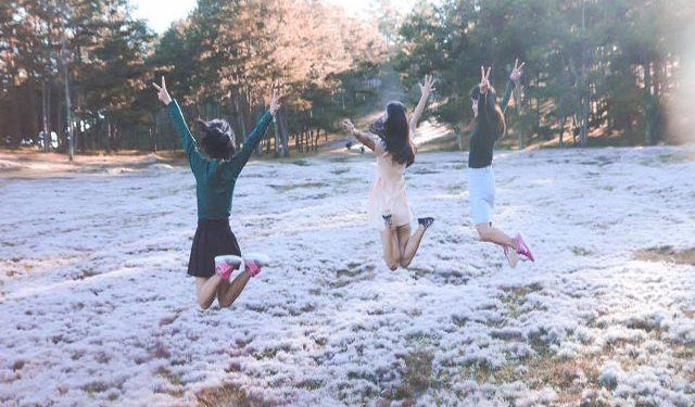 Đồi cỏ tuyết Đà Lạt