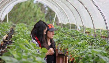 Tour Tham Quan Vườn Dâu Đà Lạt
