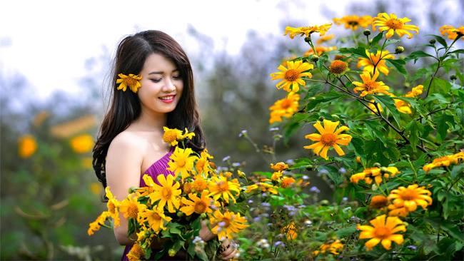 hoa dã quỳ ở Đà Lạt