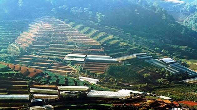 Tuy nhiên, ruộng này không trồng lúa giống ở các tỉnh trung du, miền núi phía Bắc mà trồng rau, hoa màu.