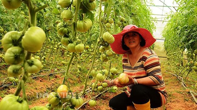 Người dân nơi đây làm nông nghiệp công nghệ cao.