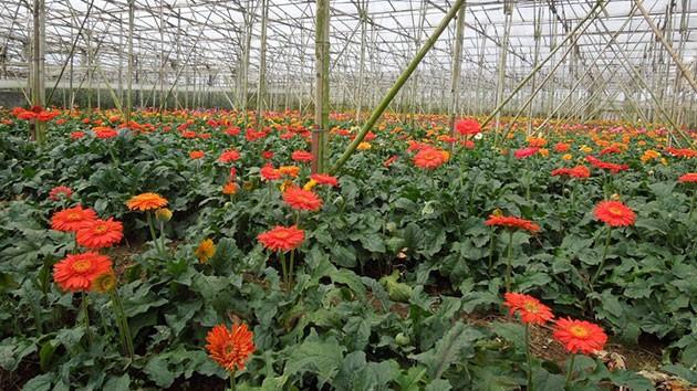 Bên trong những khu nhà kính này là các loại rau, hoa công nghệ cao.