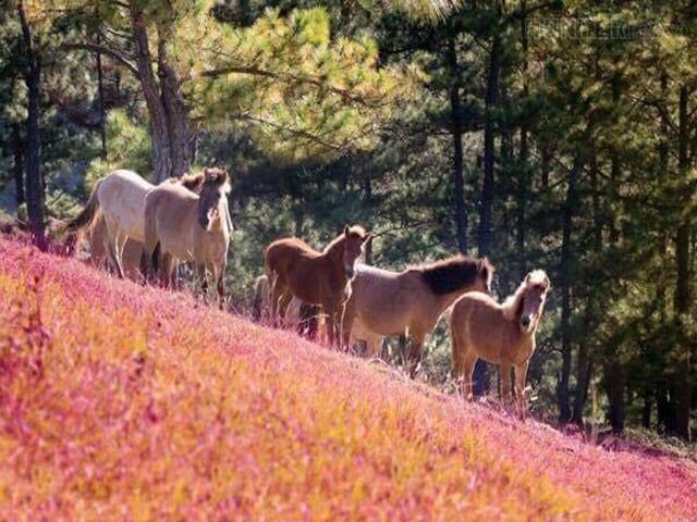 Lễ hội cỏ hồng Đà Lạt