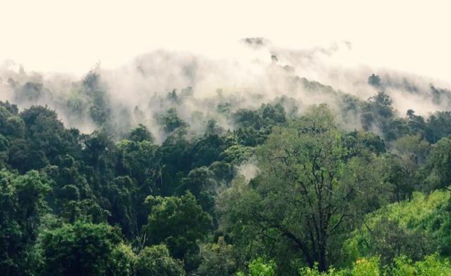 Sương mù bao phủ Hoa Sơn Điền Trang