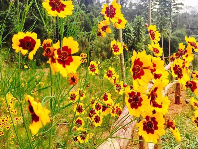 hoa đẹp ở hoa sơn điền trang
