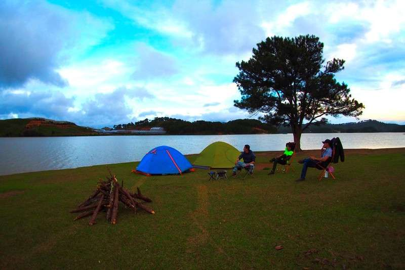 cắm trại cây thông cô đơn