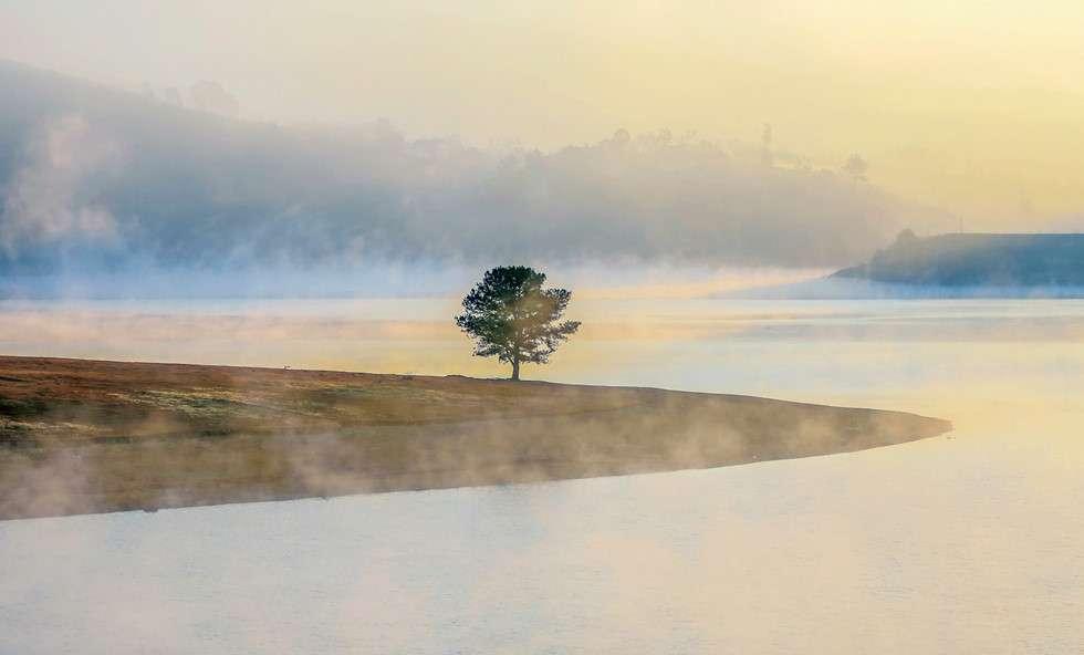cây thông cô đơn đà lạt