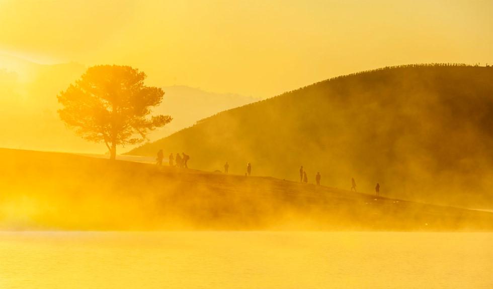 Hình ảnh cây thông cô đơn