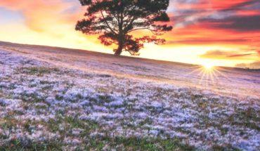 Vẻ đẹp đồi cỏ hồng ở đà lạt
